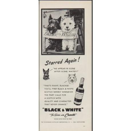 "1952 Fleischmann Ad ""Starred Again"""