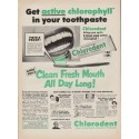 "1952 Chlorodent Toothpaste Ad ""Get active"""