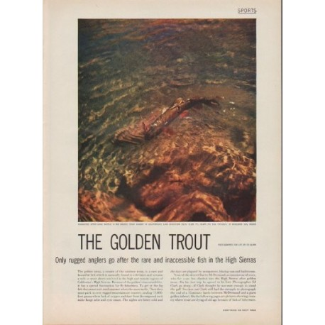 """1952 The Golden Trout Article """"rugged anglers"""""""