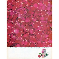 "1961 Yardley Ad ""2,000 fragrant red rose petals"""