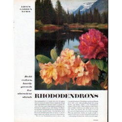"1961 Rhododendrons Article ""Bold colors"""