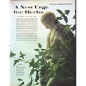 """1961 Herbs Article """"A New Urge for Herbs"""""""
