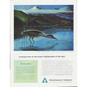 "1959 Weyerhaeuser Company Ad ""farming trees"""