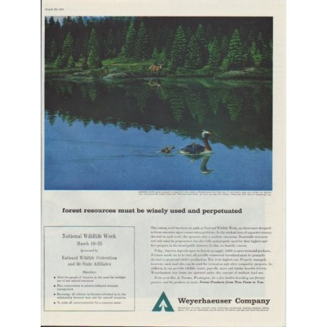 "1961 Weyerhaeuser Company Ad ""forest resources must be wisely used"""
