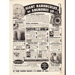 "1953 Germain's Ad ""Giant Ranunculus"""