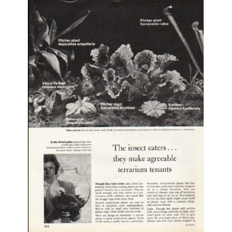 """1976 Carnivorous Plants Article """"The insect eaters"""""""