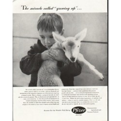 "1958 Pfizer Ad ""growing up"""