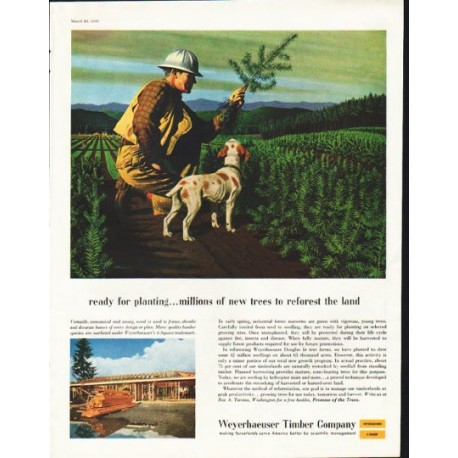 """1958 Weyerhaeuser Timber Company Ad """"ready for planting"""""""