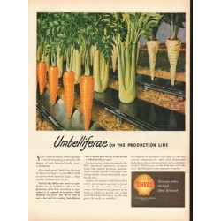 "1948 Shell Oil Company Ad ""Umbelliferae"""